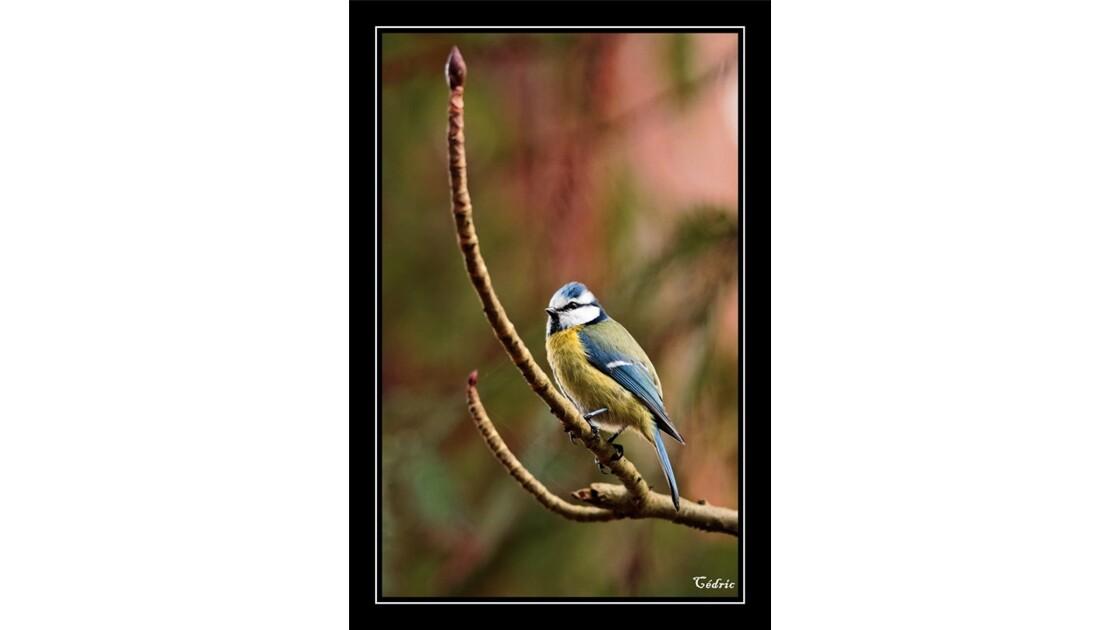 Comme une bleue sur sa branche