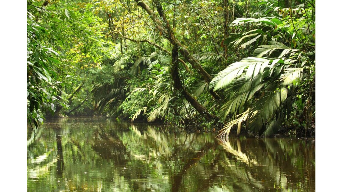 Canal Tortuguero