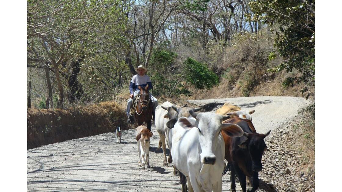 Rencontre sur la piste de Monteverde