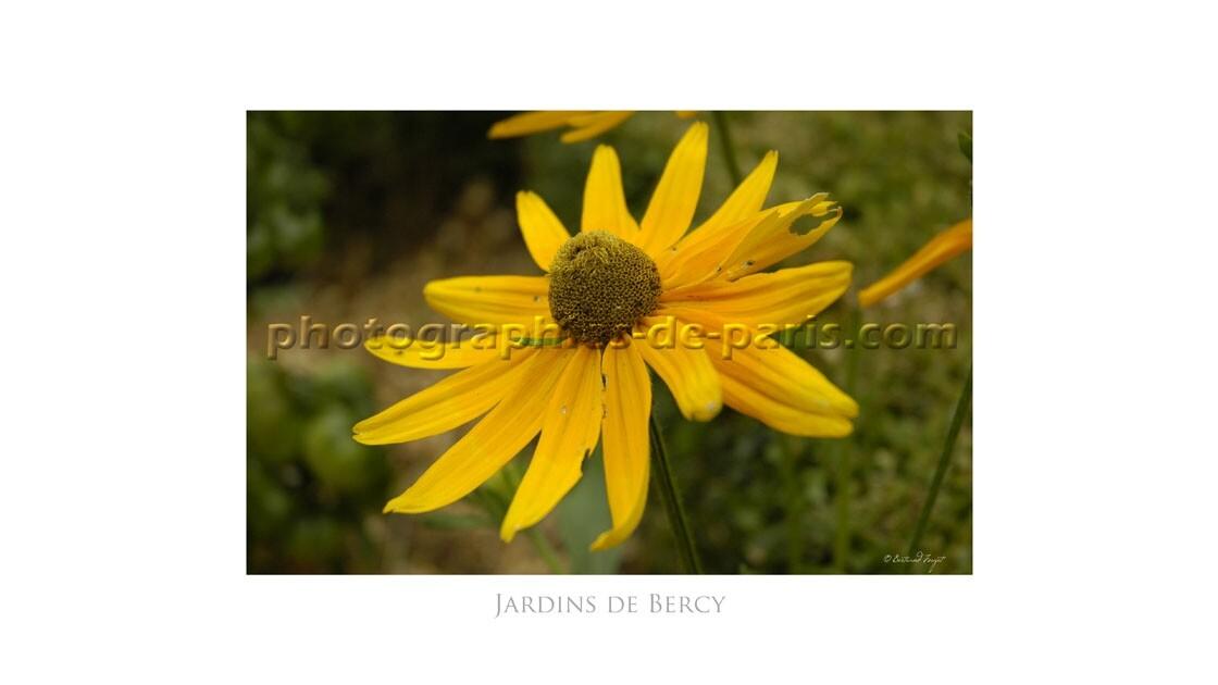 Marguerite dans les jardins de Bercy