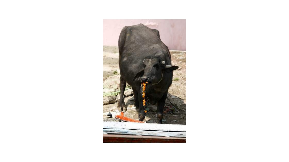 J94___Varanasi___Benares___INDE__640x48
