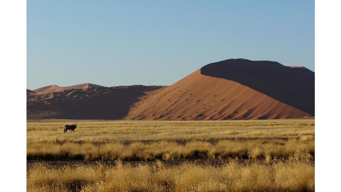 Oryx dans le Namib