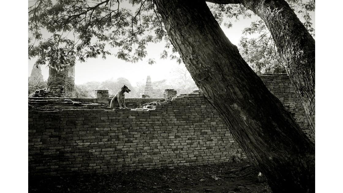 Garde à Ayutthaya (Thailande)