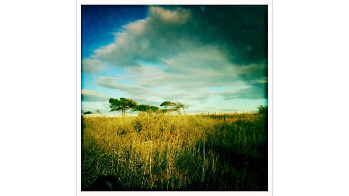 AFRICA - Canet en roussillon