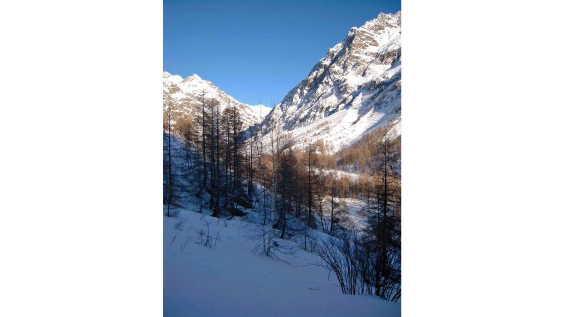 Arbres et neige