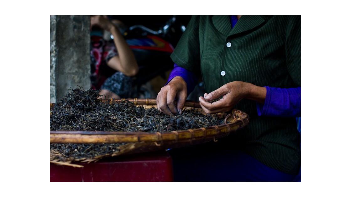 Tri du thé dans un village du nord