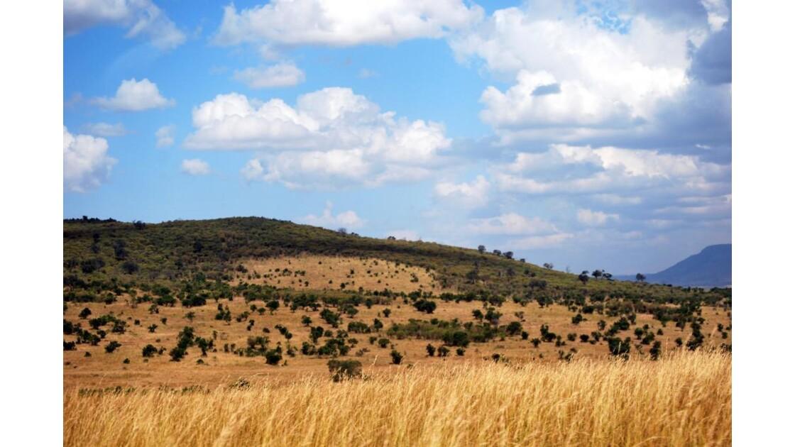 Paysage du Massaï Mara