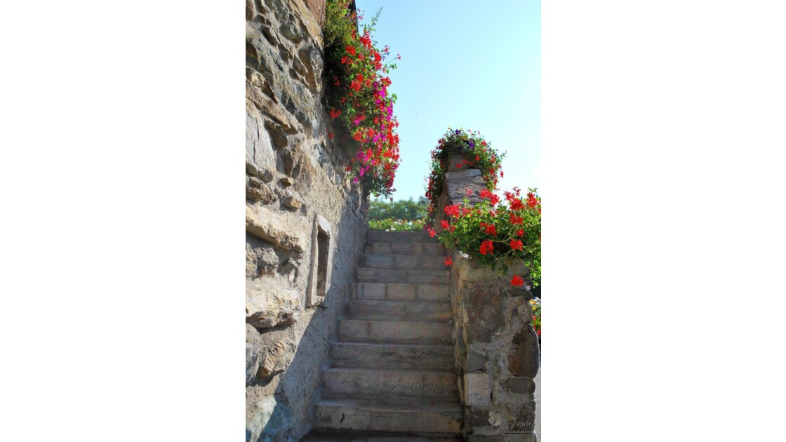 Escalier et fleurs.