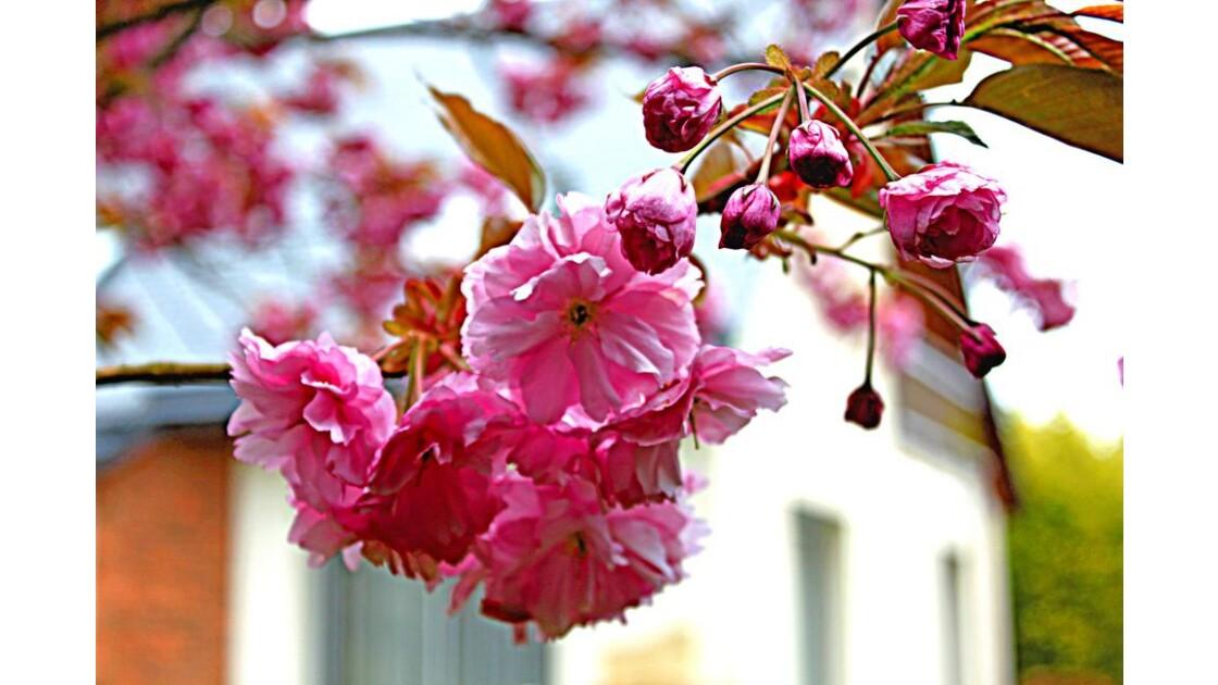 Pour voir la vie en rose  2