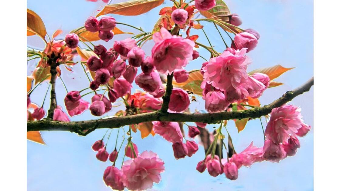 Pour voir la vie en rose 1