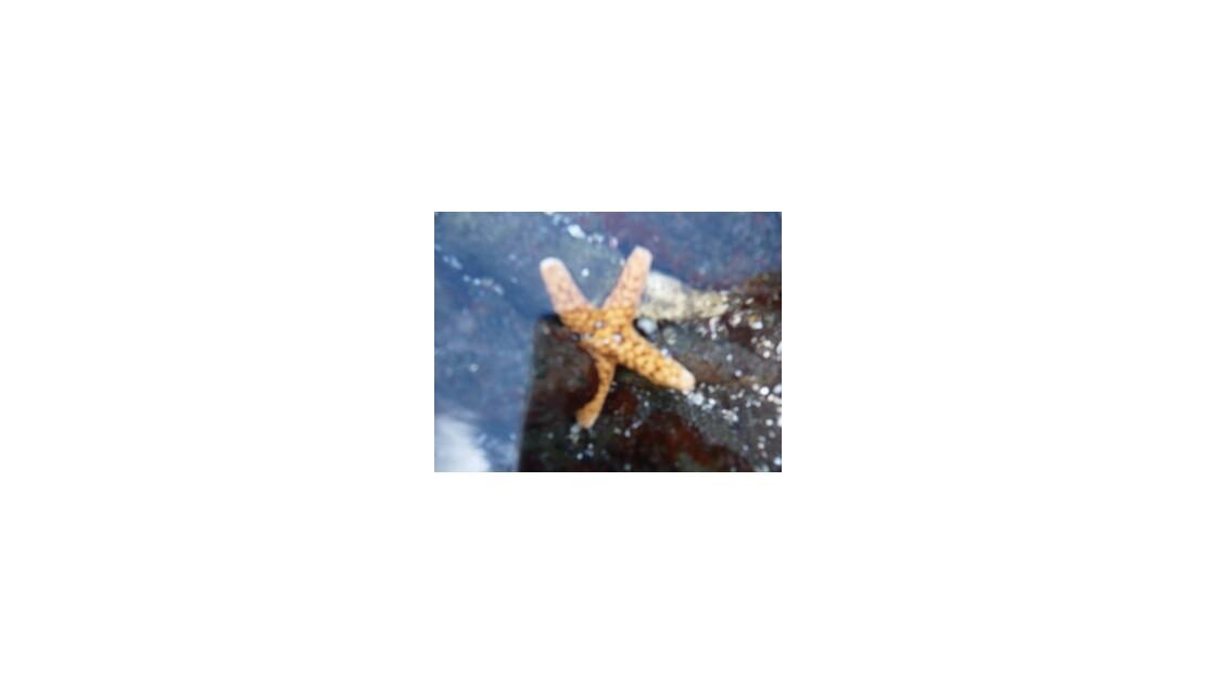 mer étoiléemornles