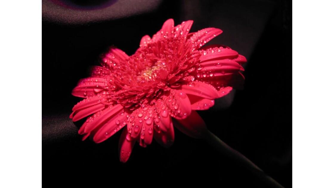 Un jour, une fleur