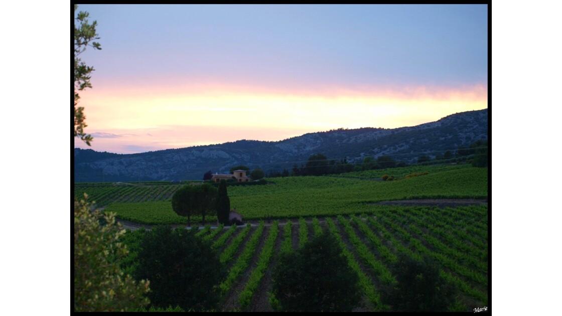 Coucher de soleil sur vignoble_P6050865
