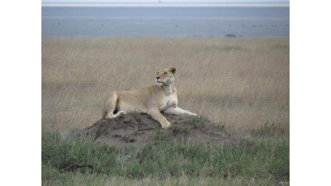 Parc National du Serengeti
