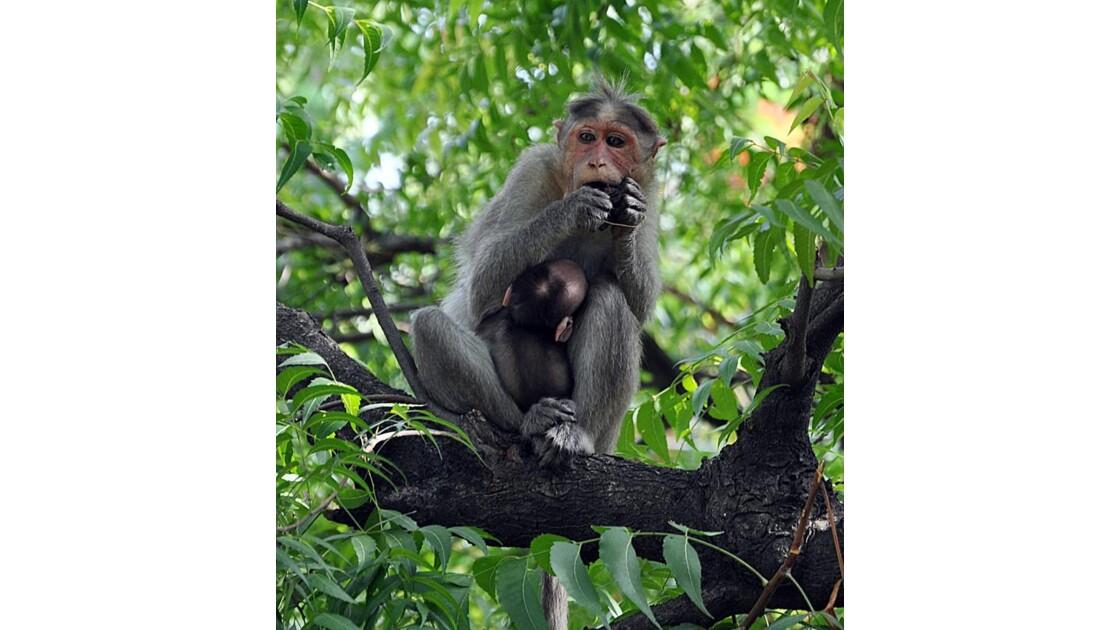 Un singe…