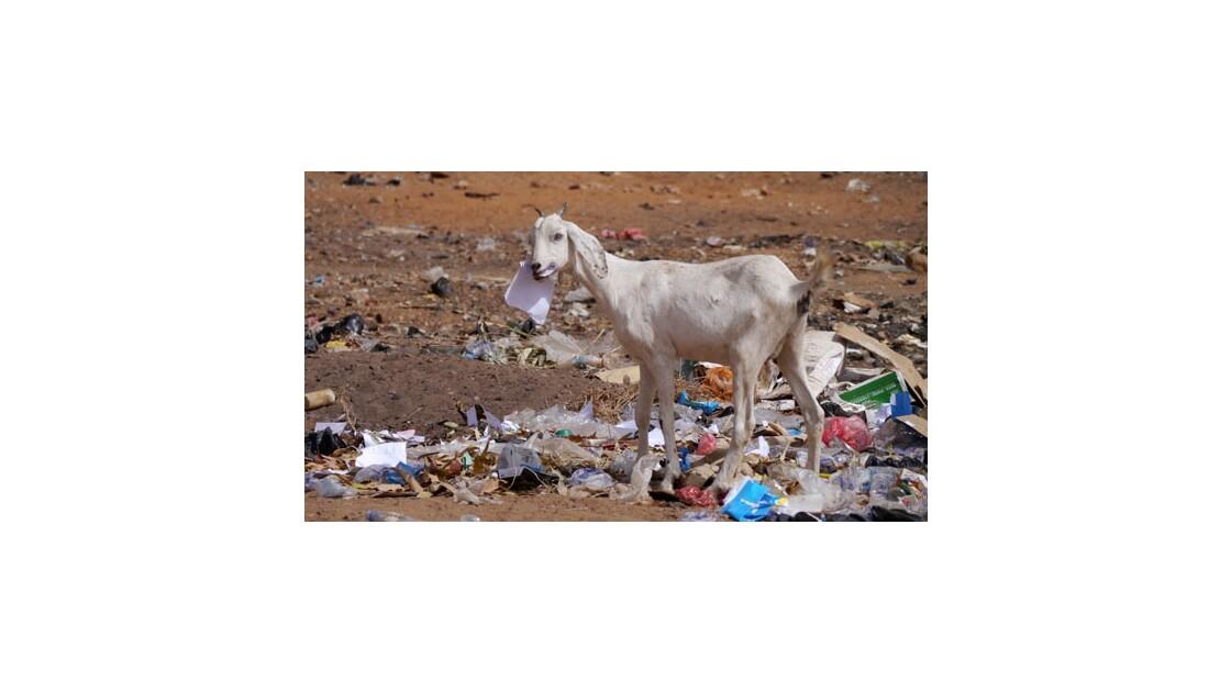 Ces animaux qu'on mange...
