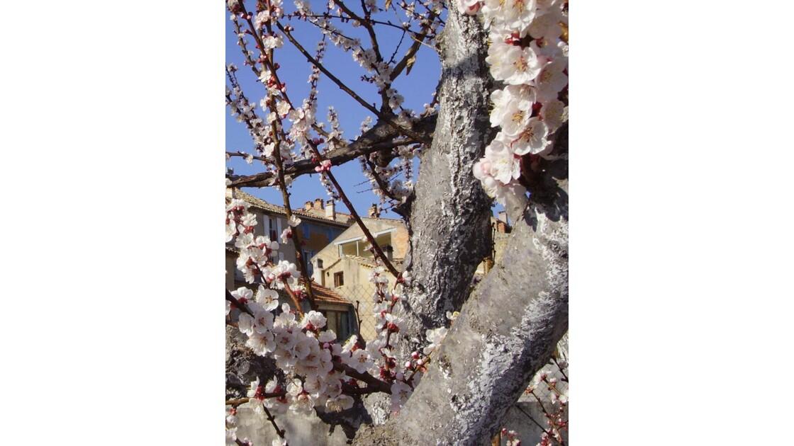 25_printemps.jpg