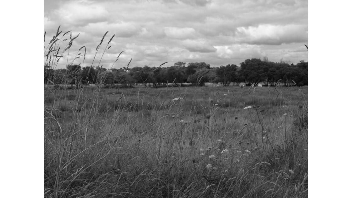 Prairie bretonne