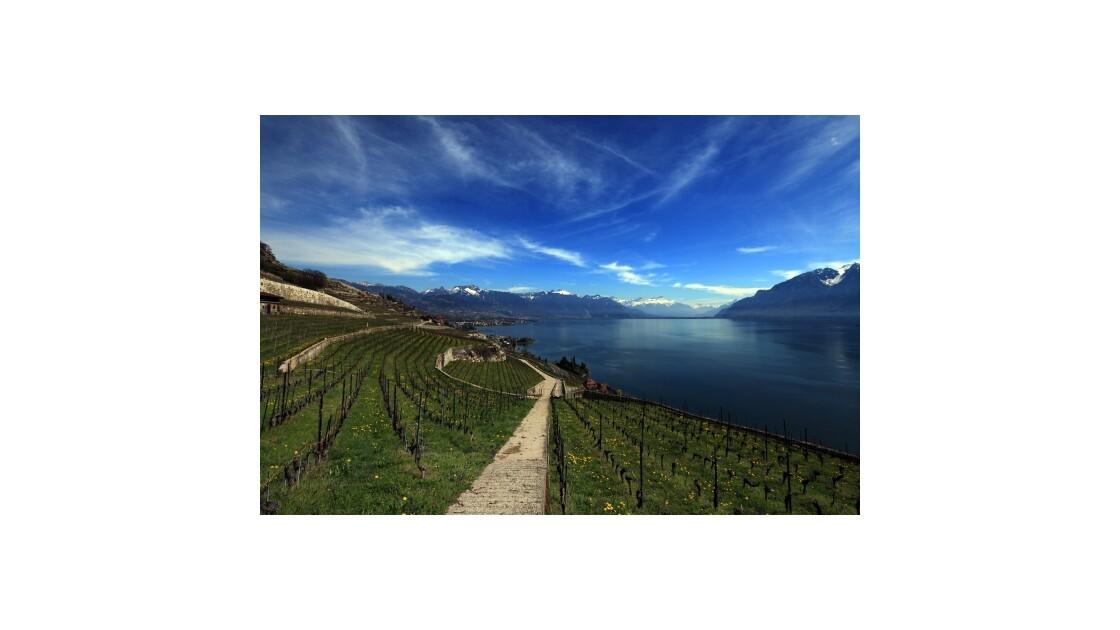 Lavaux vignobles en terrasses
