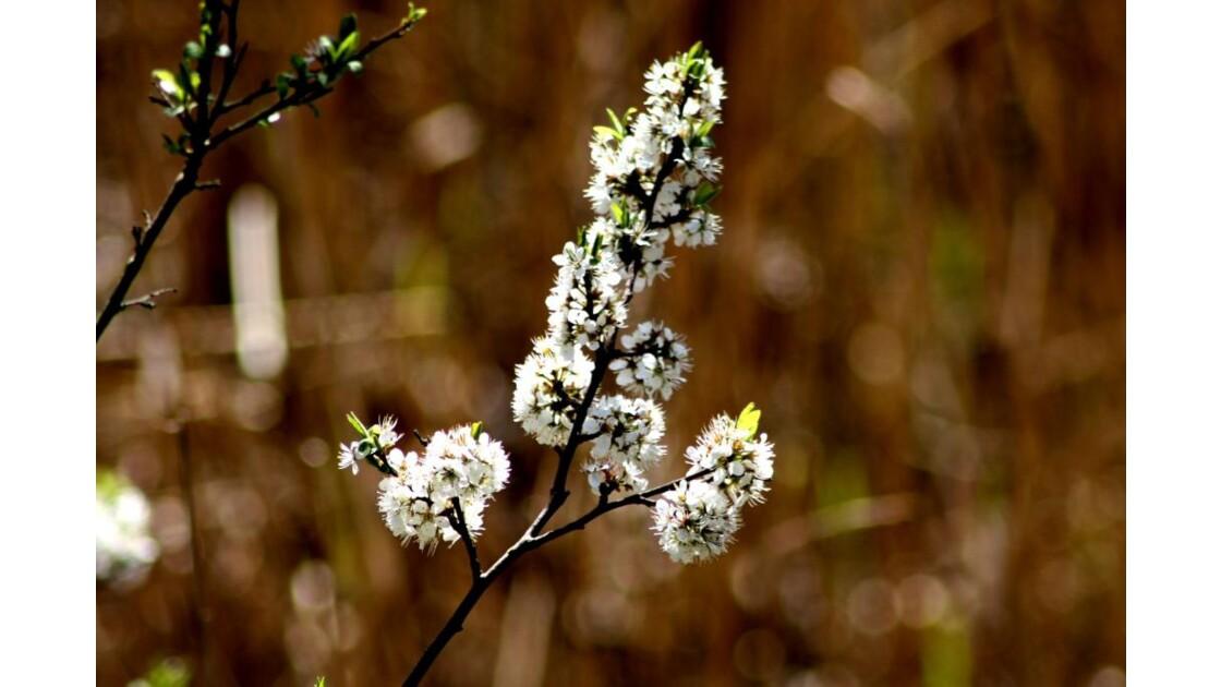 Vivement le printemps !!!