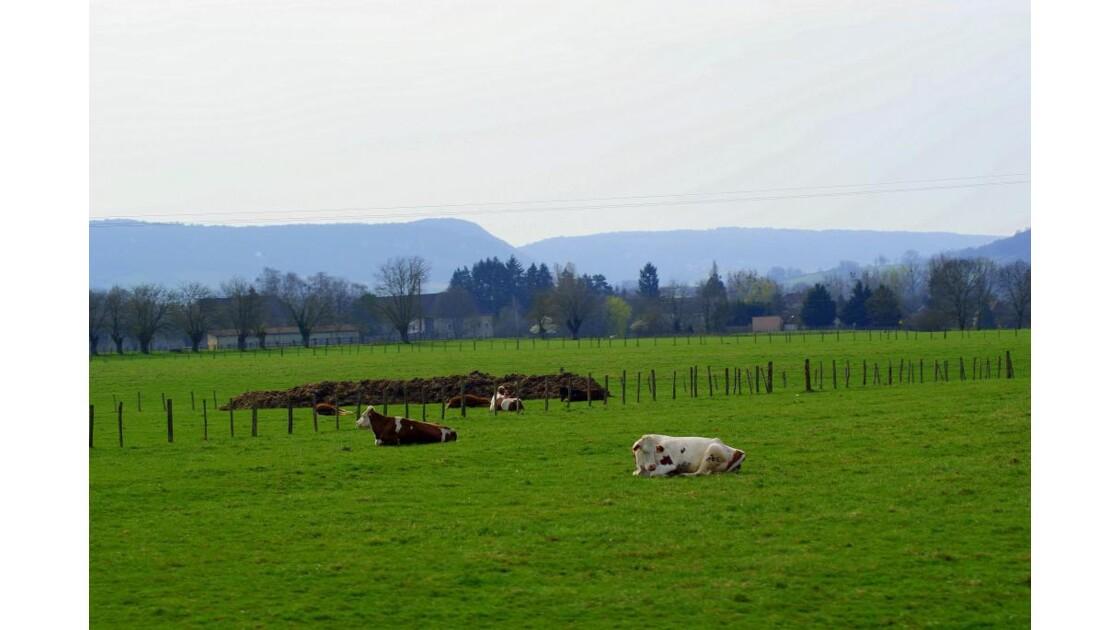 paysage jurassien