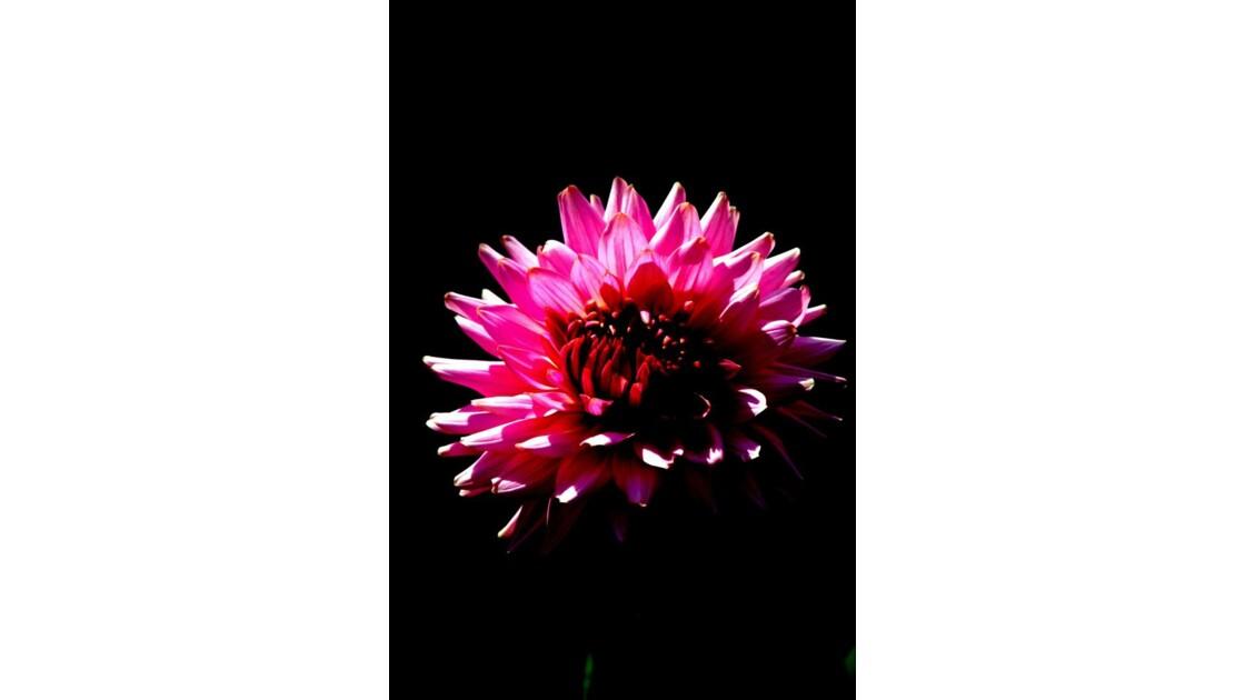 fleur_3.jpg