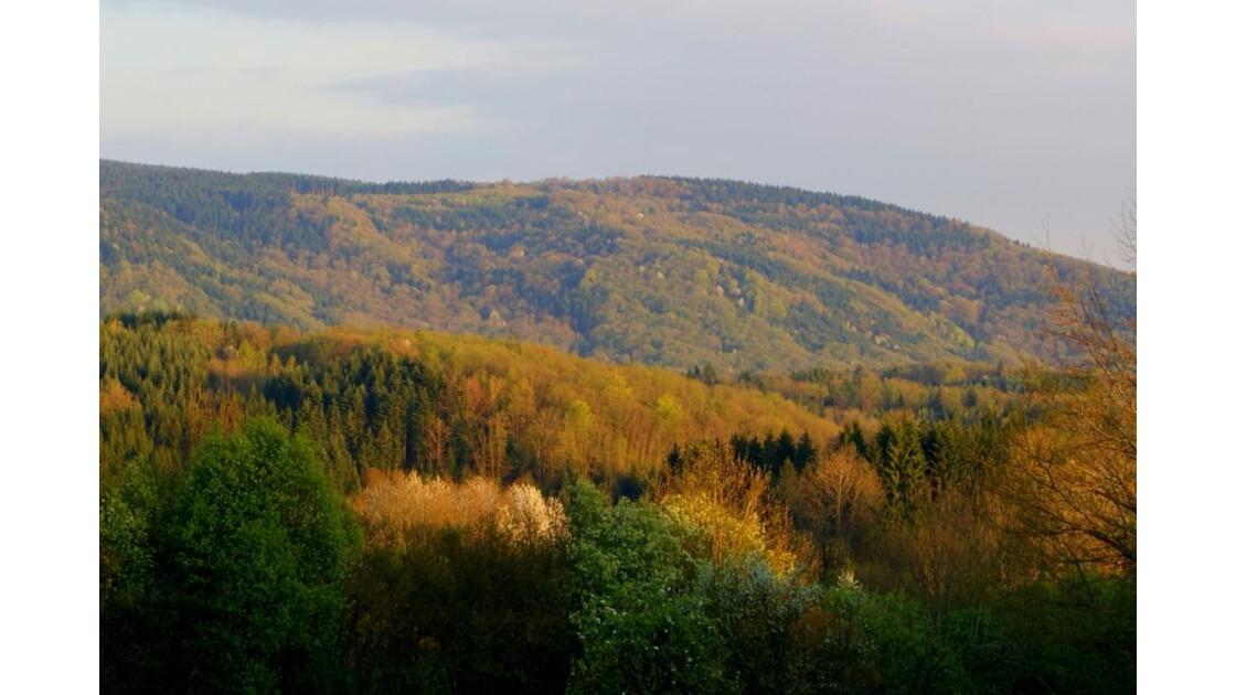 recouverte de forêts