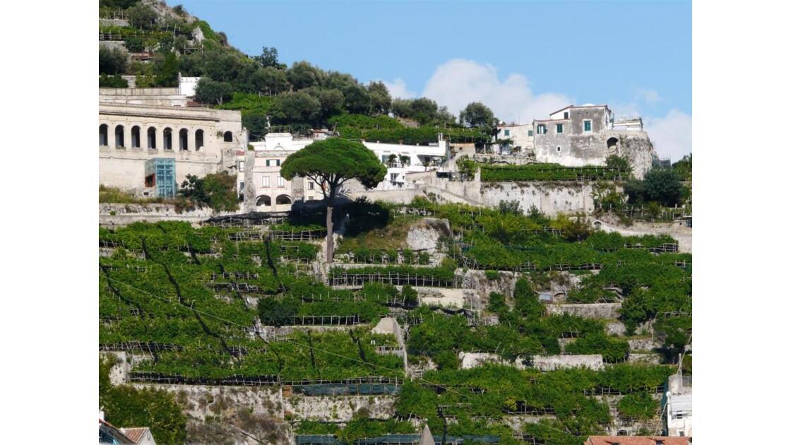 ITALIE Amalfi. Plantations