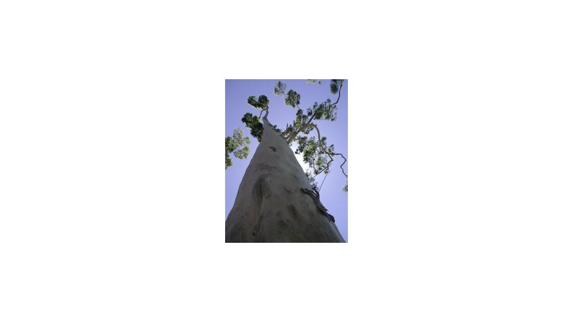 Baobab, Perth