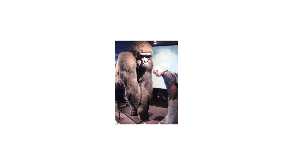 mon homme et mon gorille expo Tarzan