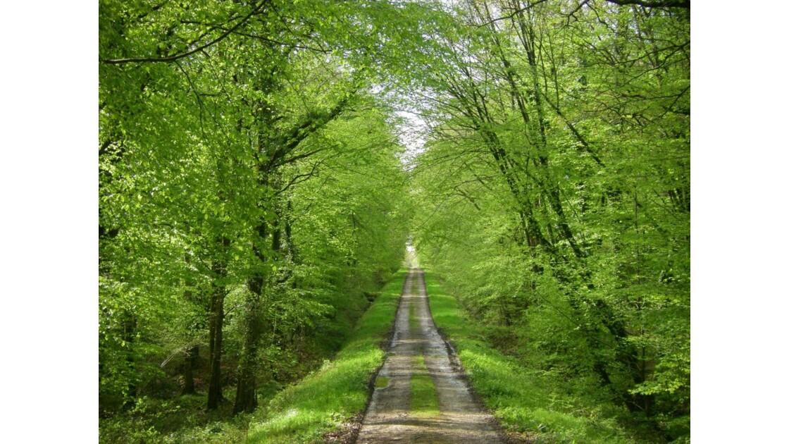 sentier du bois,