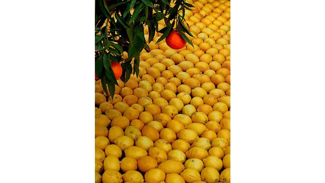 Sur fond de citrons - Menton (06)