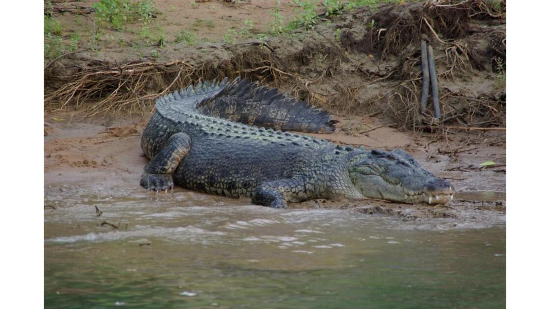 Daly River croc'