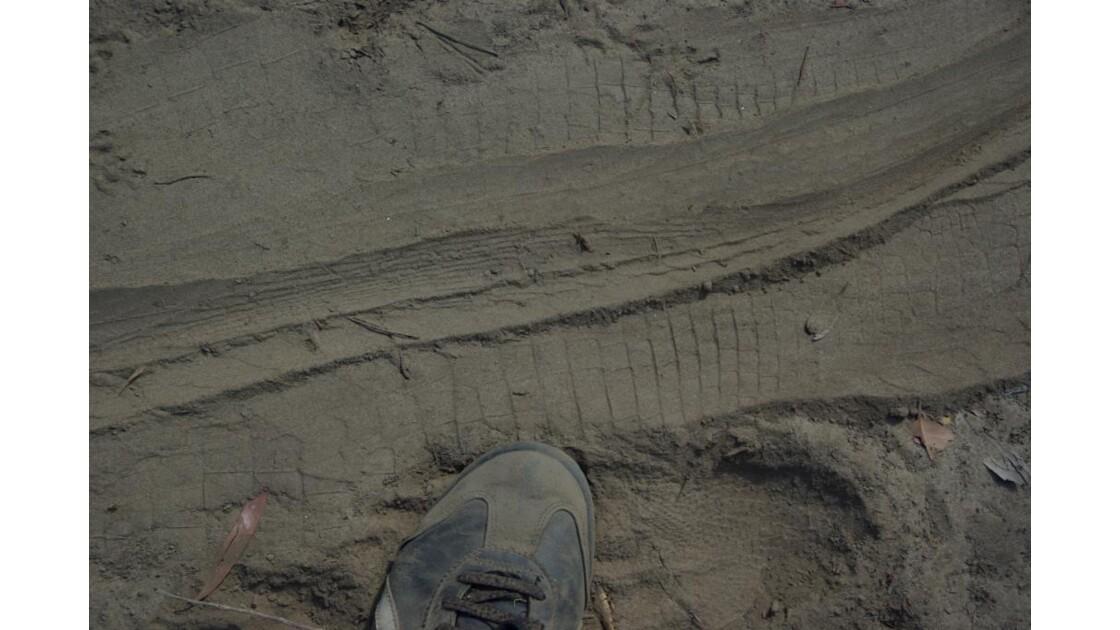 Empreintes de crocodile