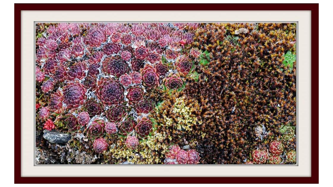 Flore de roches - 2012 05 02 (99)