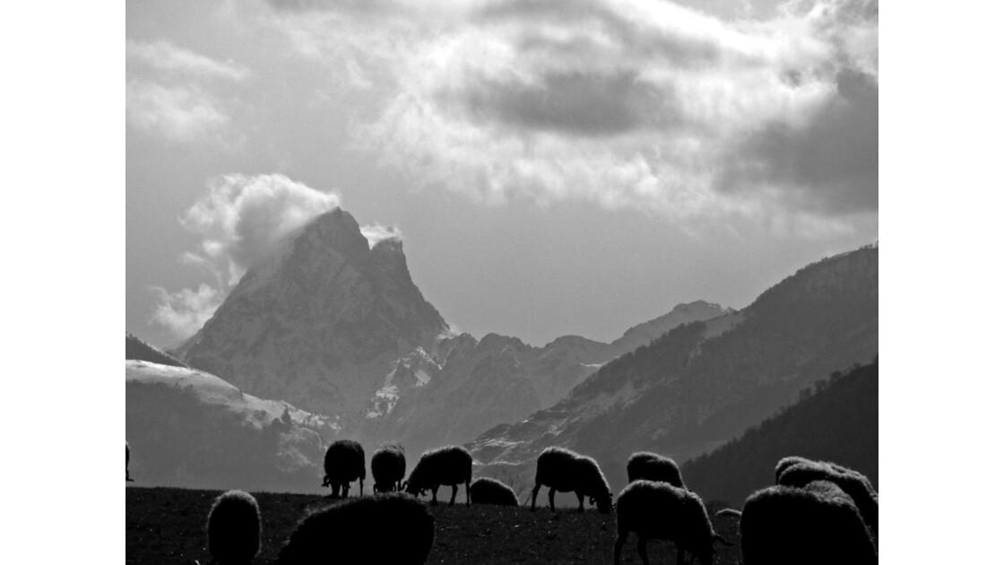 Pic du Midi d'Ossau et brebis - 2010 02