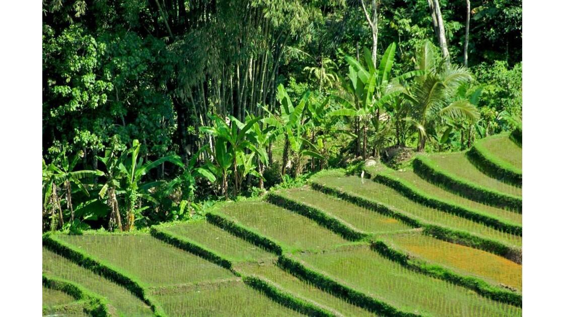 Bali nature 8