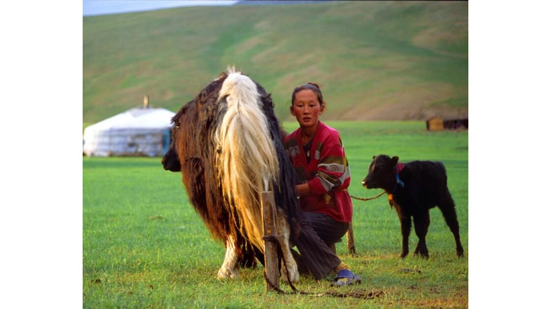 Traite des yaks
