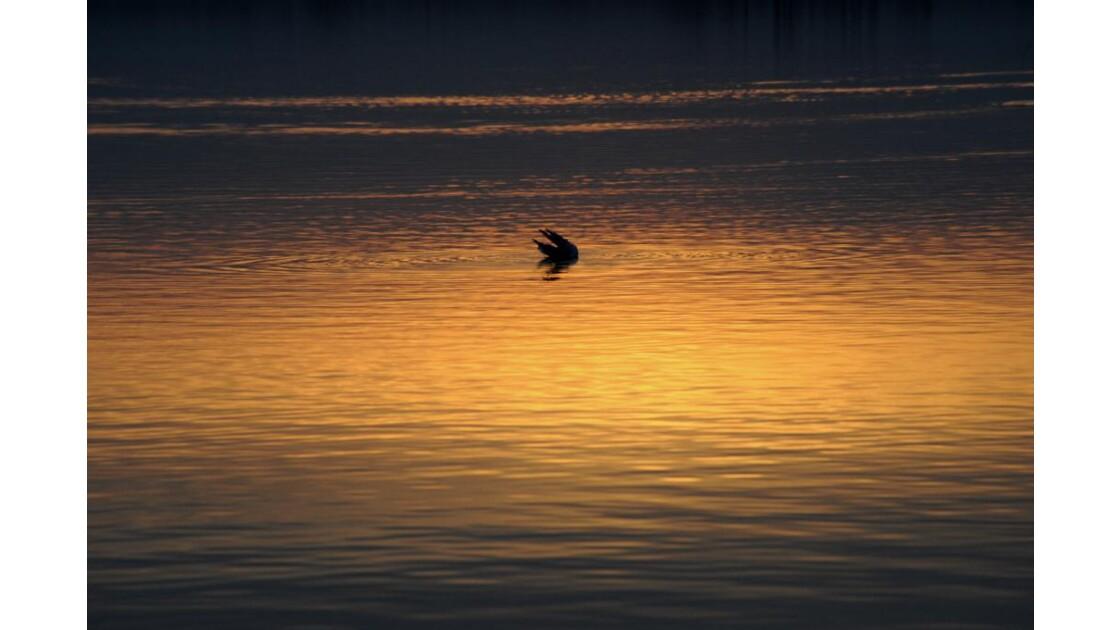 Danse dans les eaux dorées du lac
