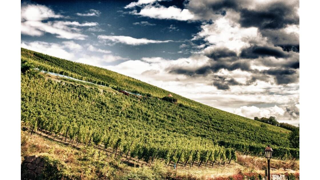 les vignes de Riquewihr