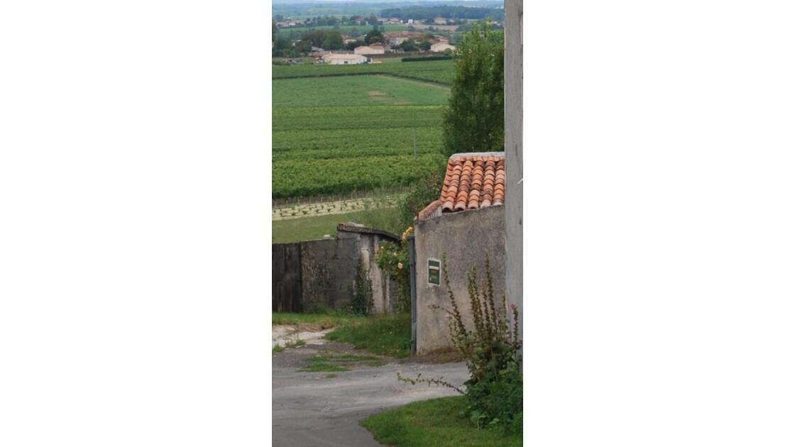 Cognac, les vignes