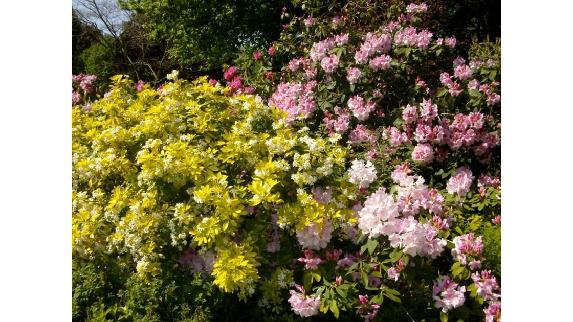 Arbustes en fleurs.JPG