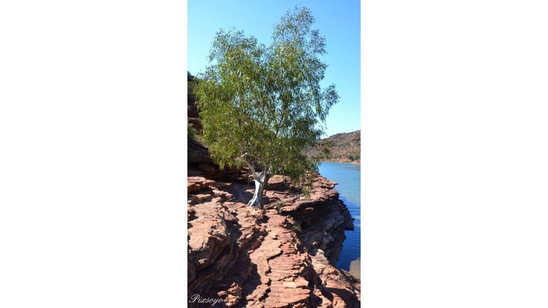 Lit de la Murchison river