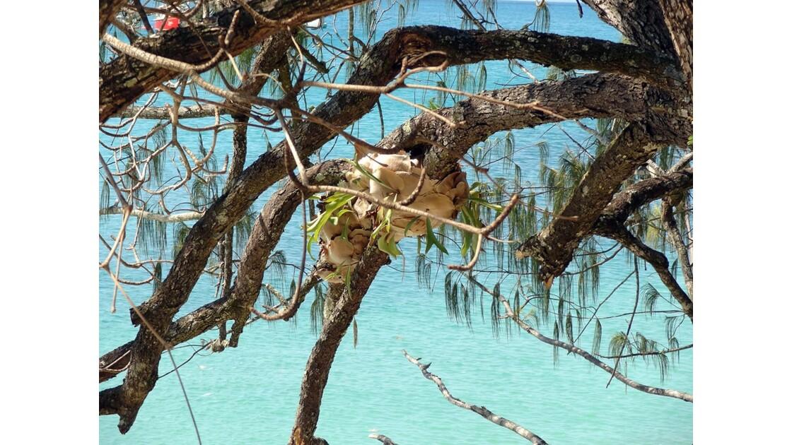 Australie Queensland île Fitzroy 3.jpg