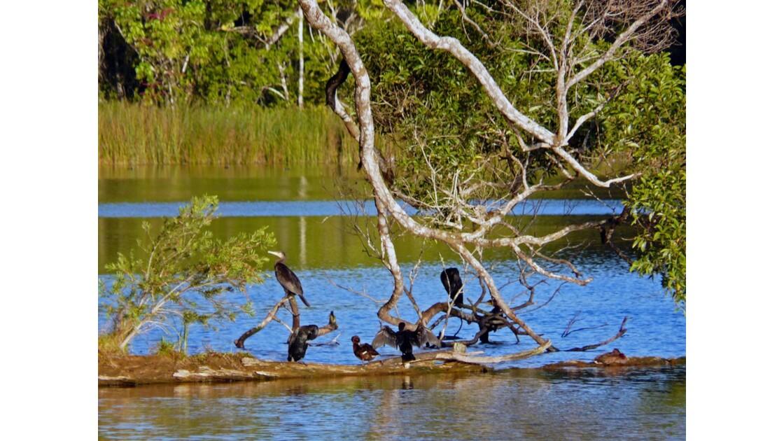Australie Queensland Lac Barrine.jpg