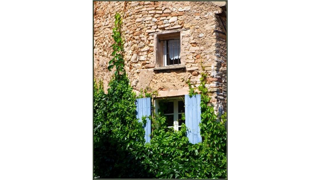 Fenêtres à la vigne vierge_P6019243.jpg
