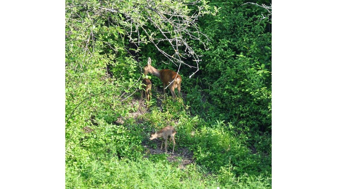 Protégés des chasseurs