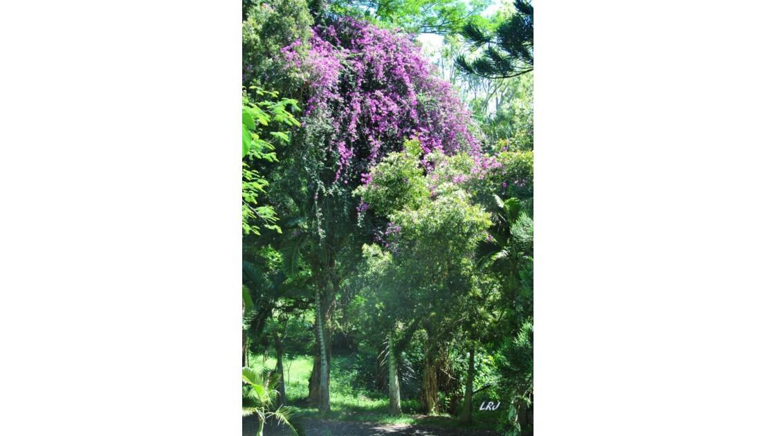 Le jardin de Pamplemousses.