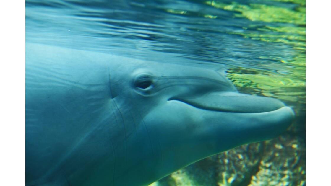 le peudo-sourire du dauphin !