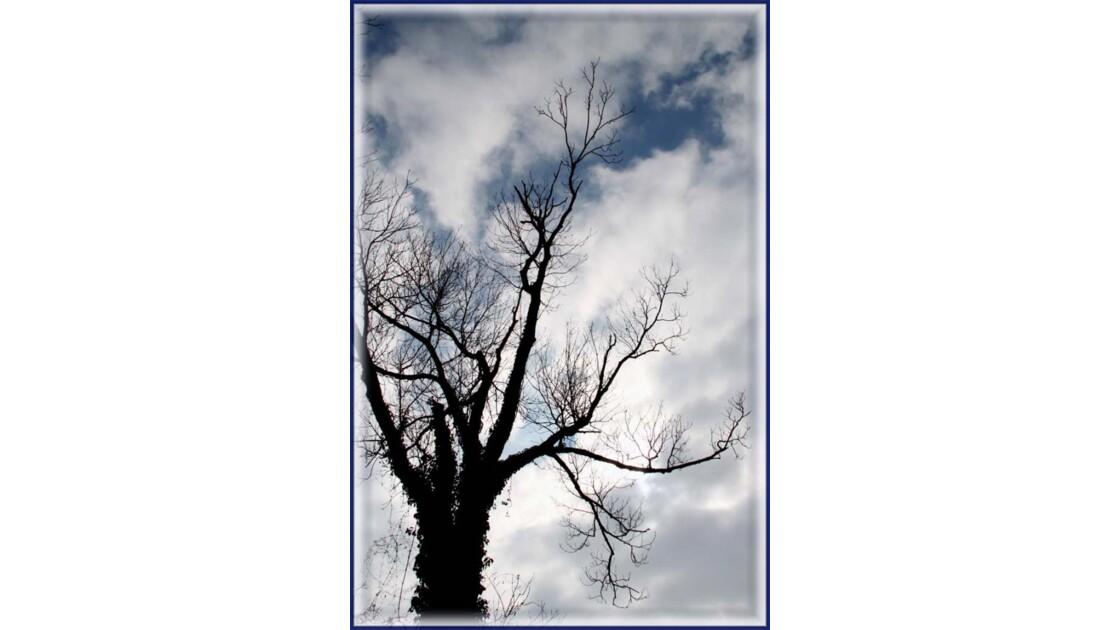 L'arbre sur le ciel